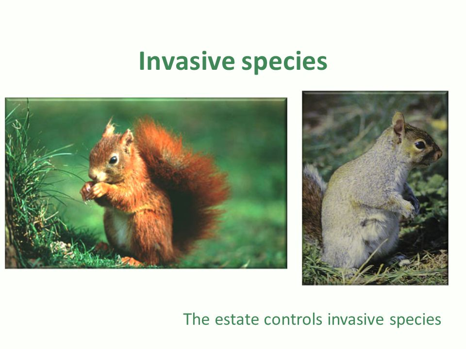 Invasive species The estate controls invasive species