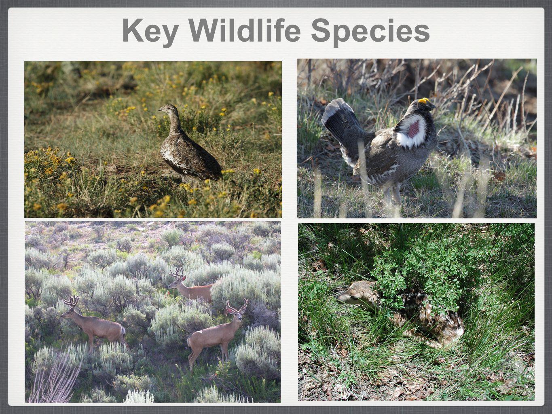 Key Wildlife Species