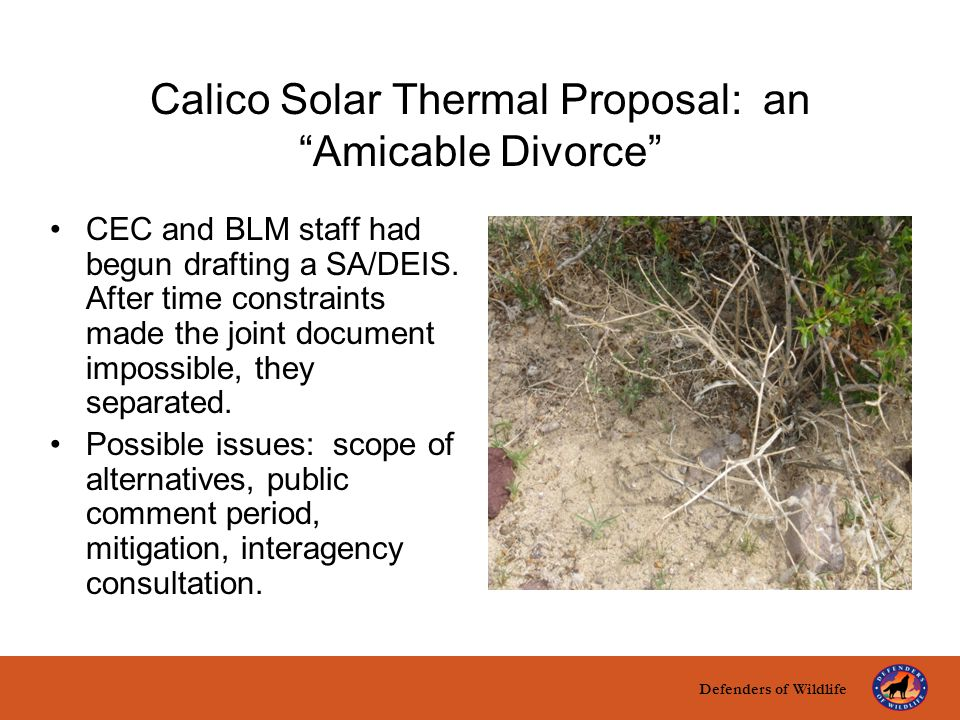 "Defenders of Wildlife title here text here Calico Solar Thermal Proposal: an ""Amicable Divorce"" CEC and BLM staff had begun drafting a SA/DEIS. After"