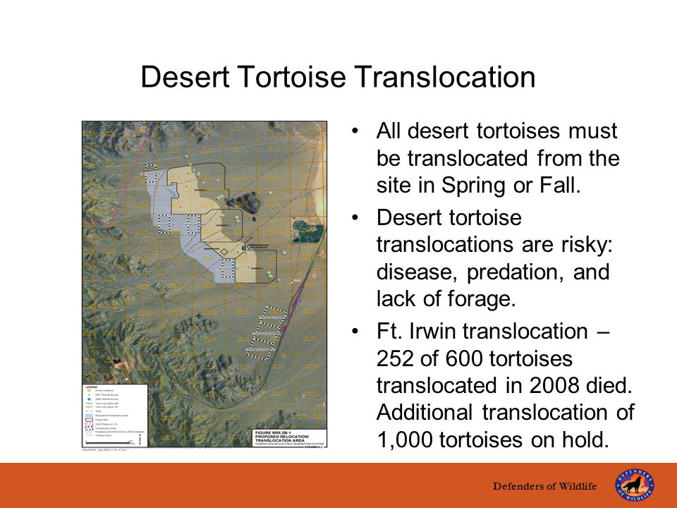 Defenders of Wildlife title here text here Desert Tortoise Translocation All desert tortoises must be translocated from the site in Spring or Fall. De