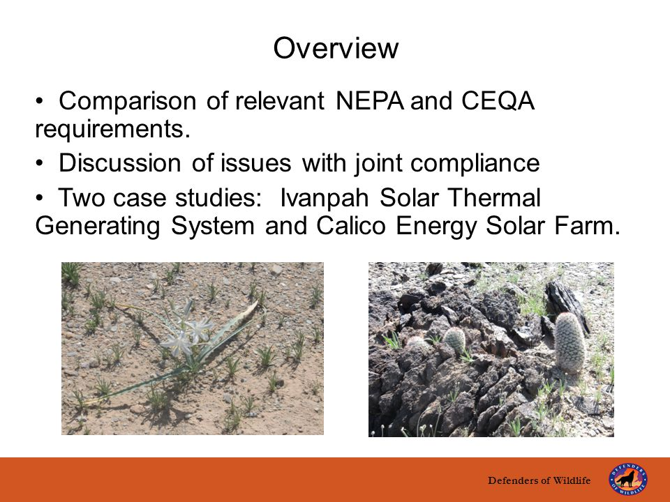 title here text here Overview Comparison of relevant NEPA and CEQA requirements. Discussion of issues with joint compliance Two case studies: Ivanpah