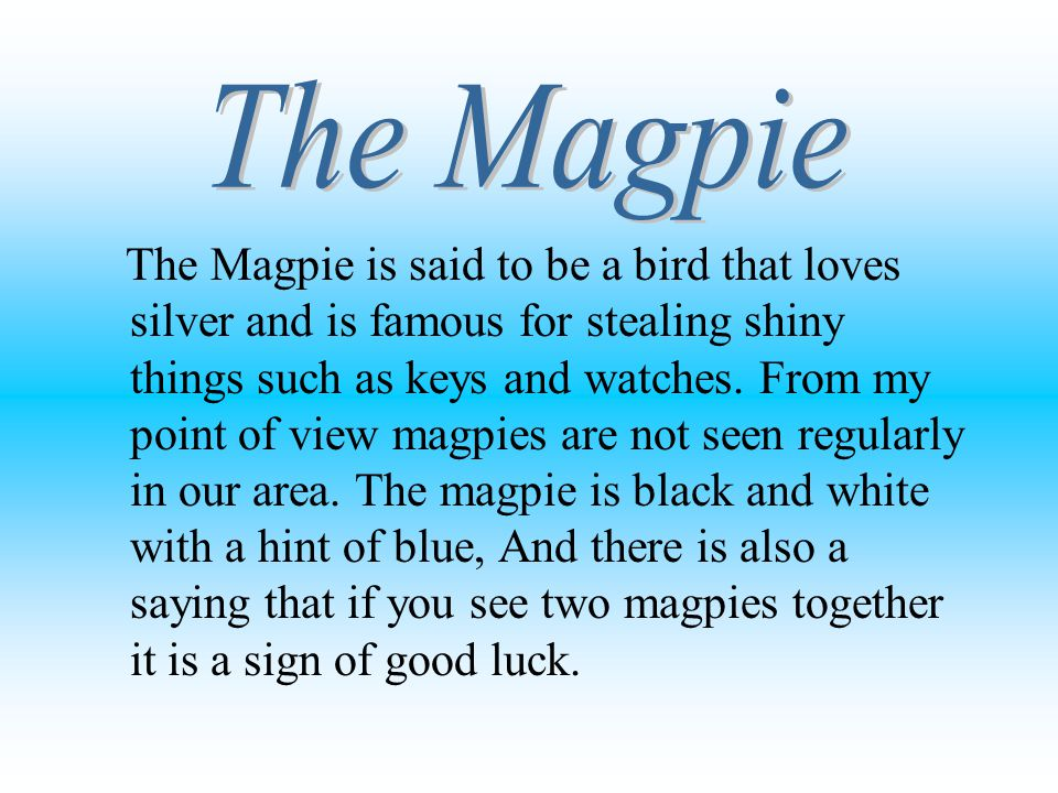 The Magpie is said to be a bird that loves silver and is famous for stealing shiny things such as keys and watches. From my point of view magpies are