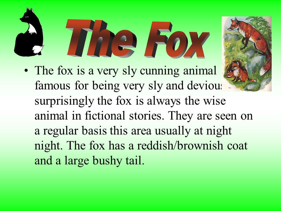 The fox is a very sly cunning animal famous for being very sly and devious. Not surprisingly the fox is always the wise animal in fictional stories. T