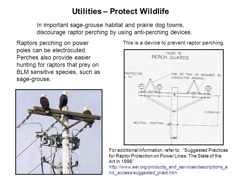 Utilities – Protect Wildlife In important sage-grouse habitat and prairie dog towns, discourage raptor perching by using anti-perching devices.