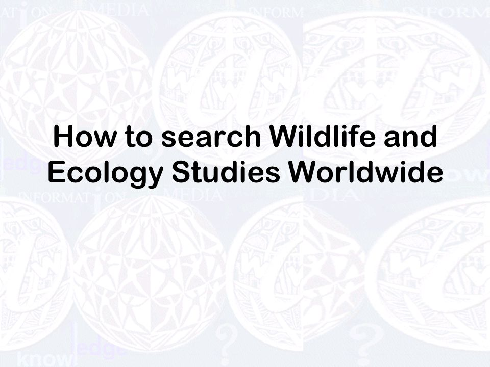 How to search Wildlife and Ecology Studies Worldwide