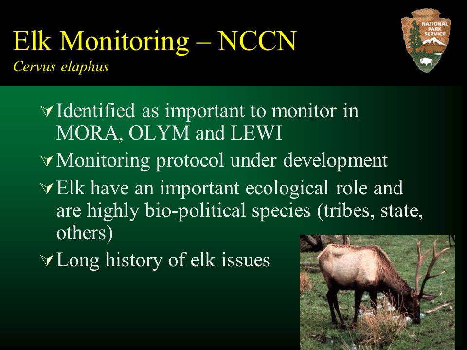Elk Monitoring – NCCN Cervus elaphus  Identified as important to monitor in MORA, OLYM and LEWI  Monitoring protocol under development  Elk have an important ecological role and are highly bio-political species (tribes, state, others)  Long history of elk issues
