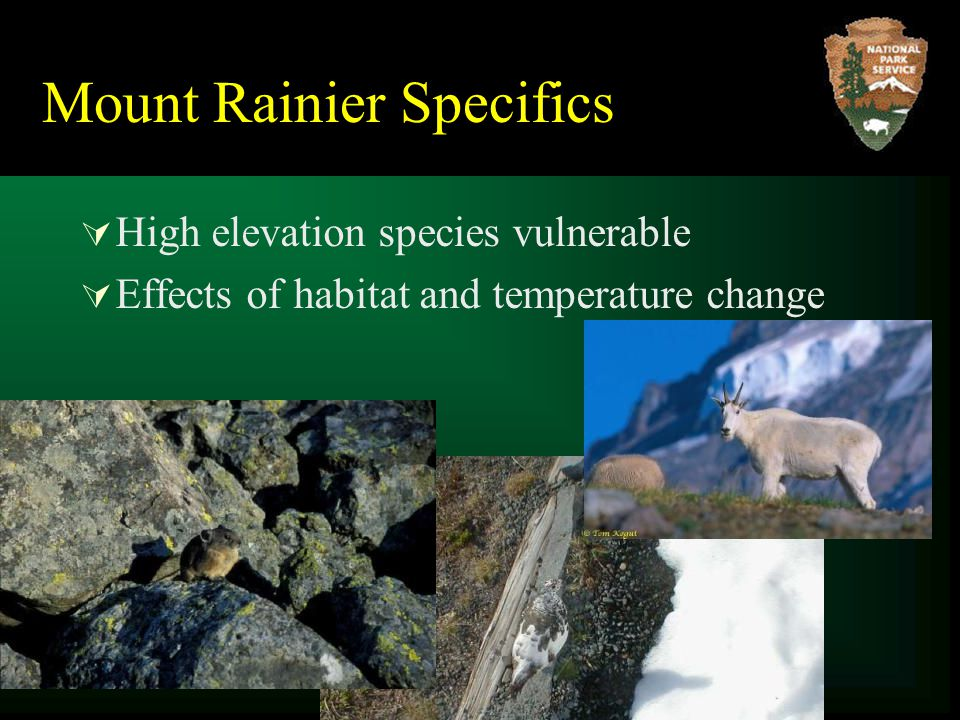 Mount Rainier Specifics  High elevation species vulnerable  Effects of habitat and temperature change