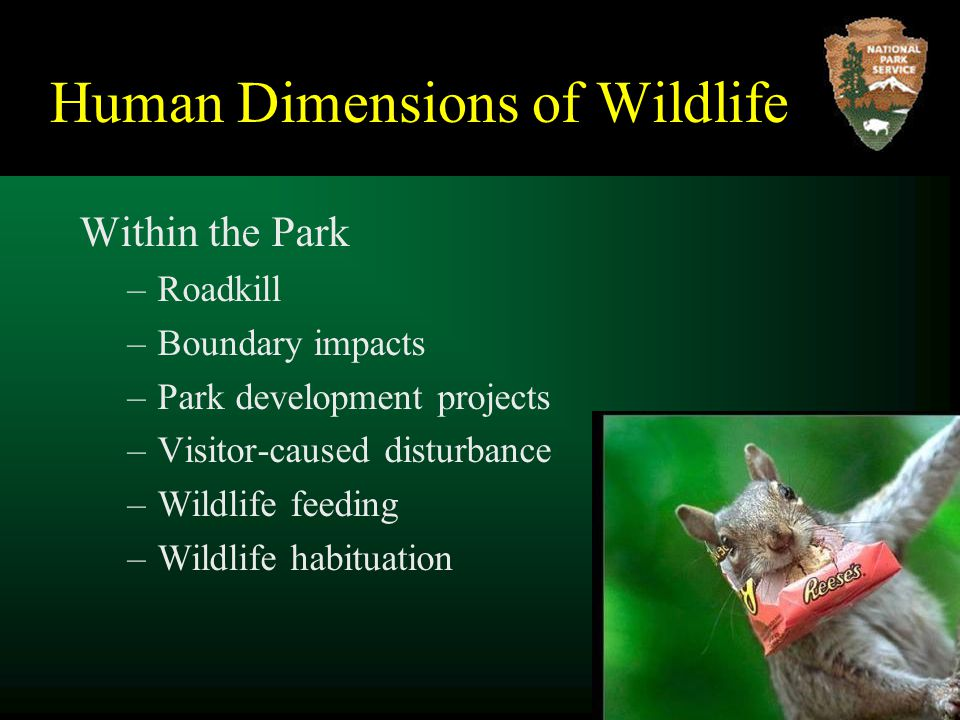 Human Dimensions of Wildlife Within the Park –Roadkill –Boundary impacts –Park development projects –Visitor-caused disturbance –Wildlife feeding –Wildlife habituation