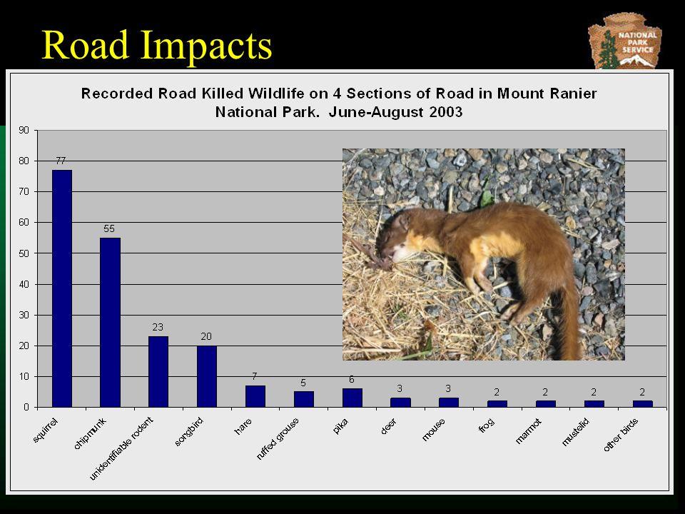 Road Impacts