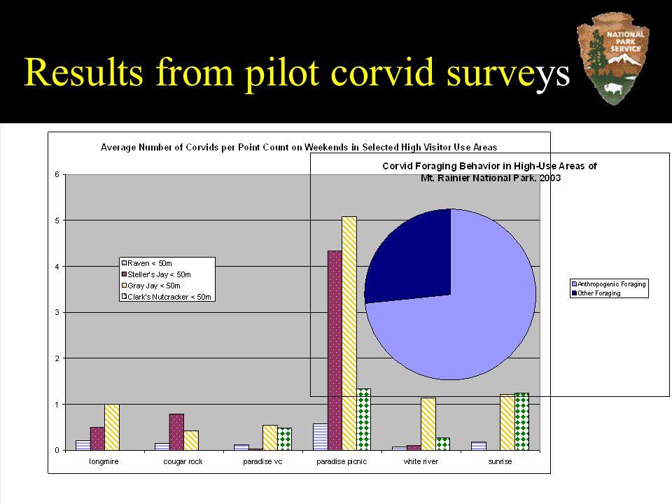 Results from pilot corvid surveys