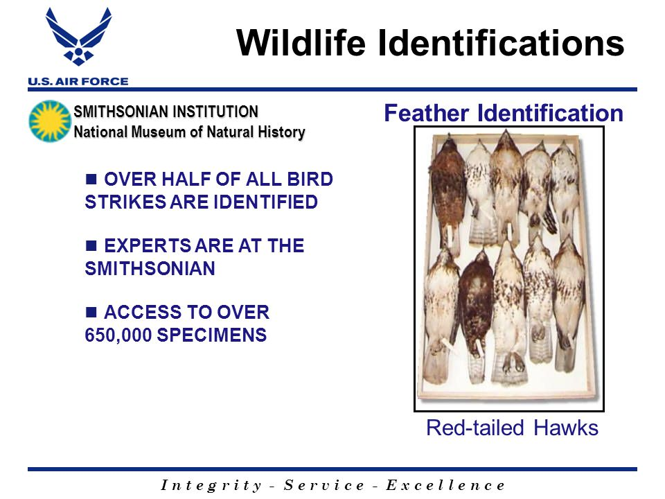 I n t e g r i t y - S e r v i c e - E x c e l l e n c e Wildlife Identifications OVER HALF OF ALL BIRD STRIKES ARE IDENTIFIED Feather Identification Red-tailed Hawks EXPERTS ARE AT THE SMITHSONIAN ACCESS TO OVER 650,000 SPECIMENS SMITHSONIAN INSTITUTION National Museum of Natural History