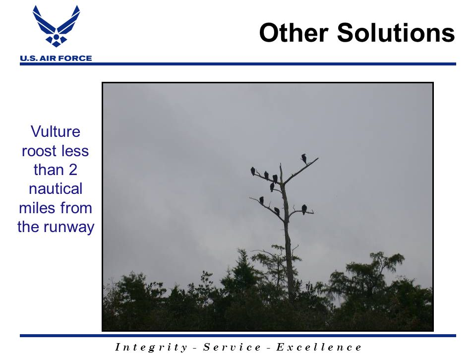 I n t e g r i t y - S e r v i c e - E x c e l l e n c e Vulture roost less than 2 nautical miles from the runway Other Solutions