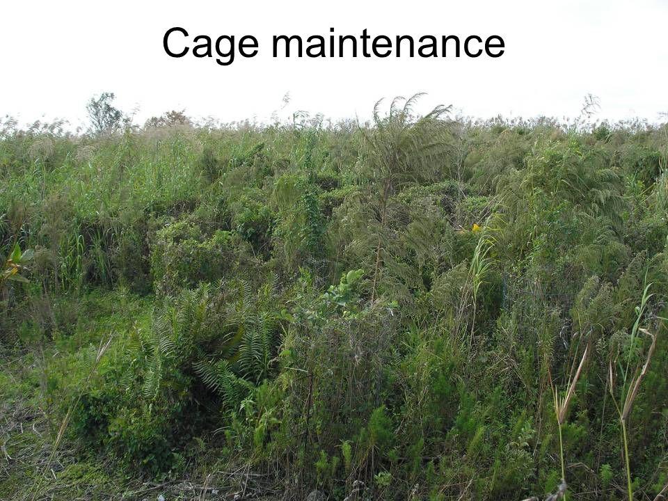 Cage maintenance