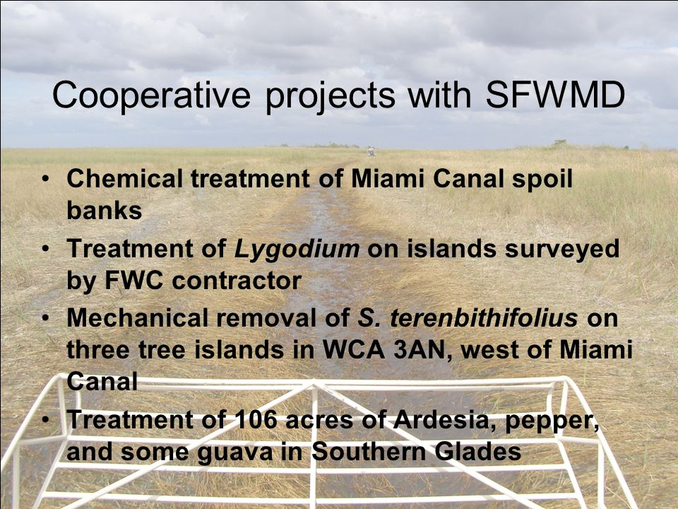 Cooperative projects with SFWMD Chemical treatment of Miami Canal spoil banks Treatment of Lygodium on islands surveyed by FWC contractor Mechanical removal of S.