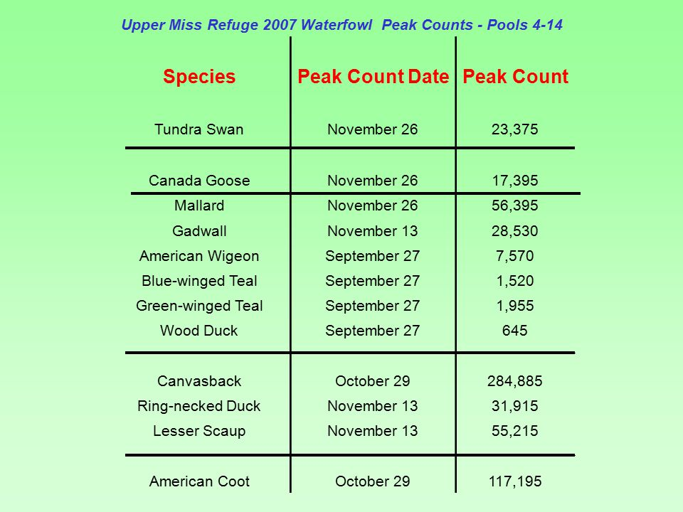 Upper Miss Refuge 2007 Waterfowl Peak Counts - Pools 4-14 SpeciesPeak Count DatePeak Count Tundra SwanNovember 2623,375 Canada GooseNovember 2617,395 MallardNovember 2656,395 GadwallNovember 1328,530 American WigeonSeptember 277,570 Blue-winged TealSeptember 271,520 Green-winged TealSeptember 271,955 Wood DuckSeptember 27645 CanvasbackOctober 29284,885 Ring-necked DuckNovember 1331,915 Lesser ScaupNovember 1355,215 American CootOctober 29117,195
