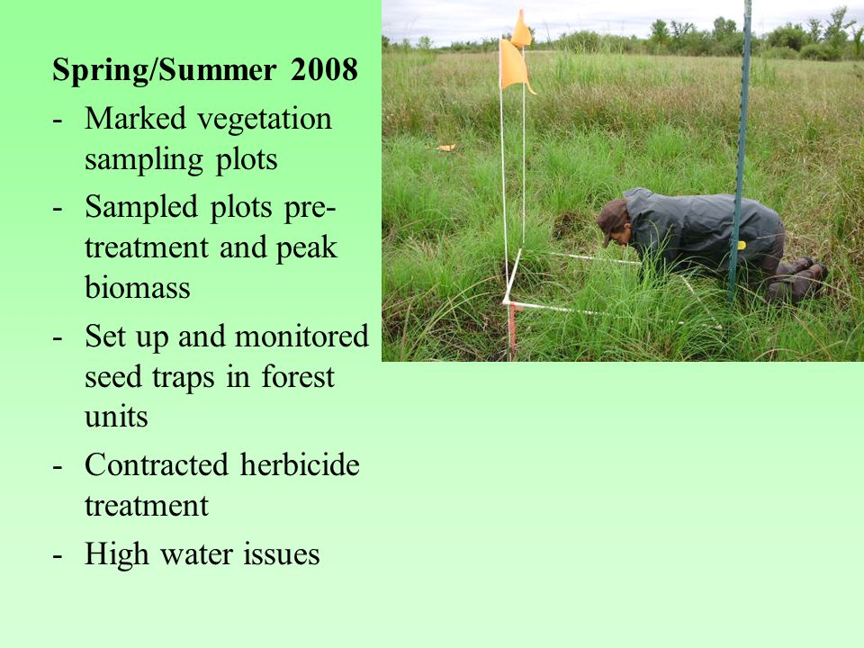 Spring/Summer 2008 -Marked vegetation sampling plots -Sampled plots pre- treatment and peak biomass -Set up and monitored seed traps in forest units -Contracted herbicide treatment -High water issues