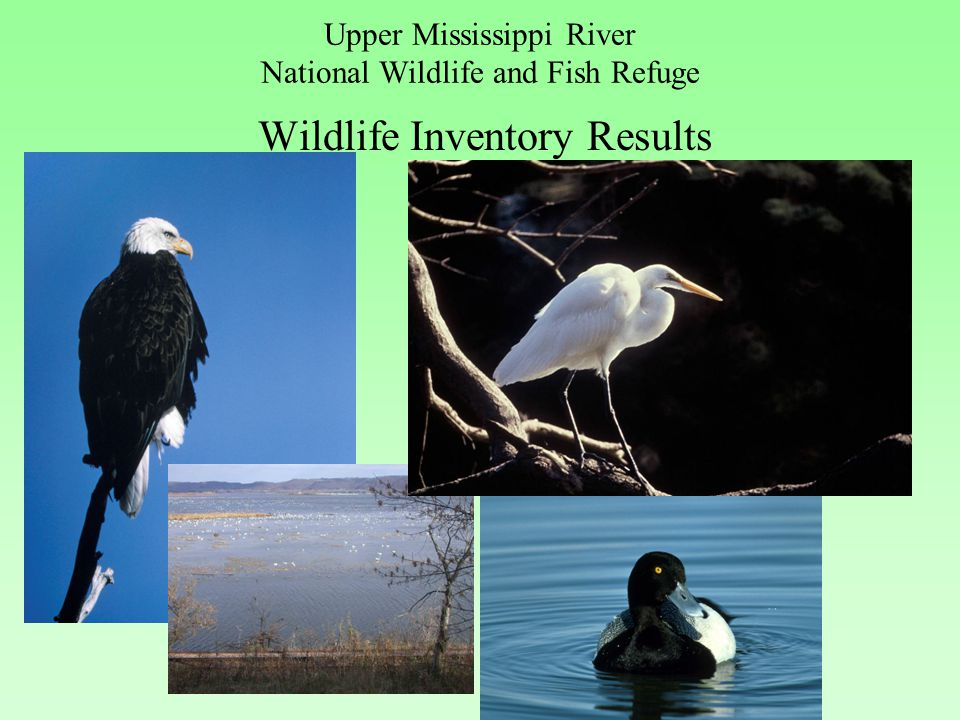 Upper Mississippi River National Wildlife and Fish Refuge Wildlife Inventory Results