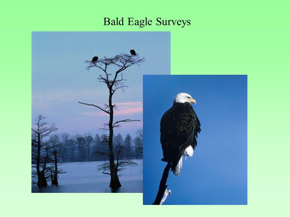 Bald Eagle Surveys