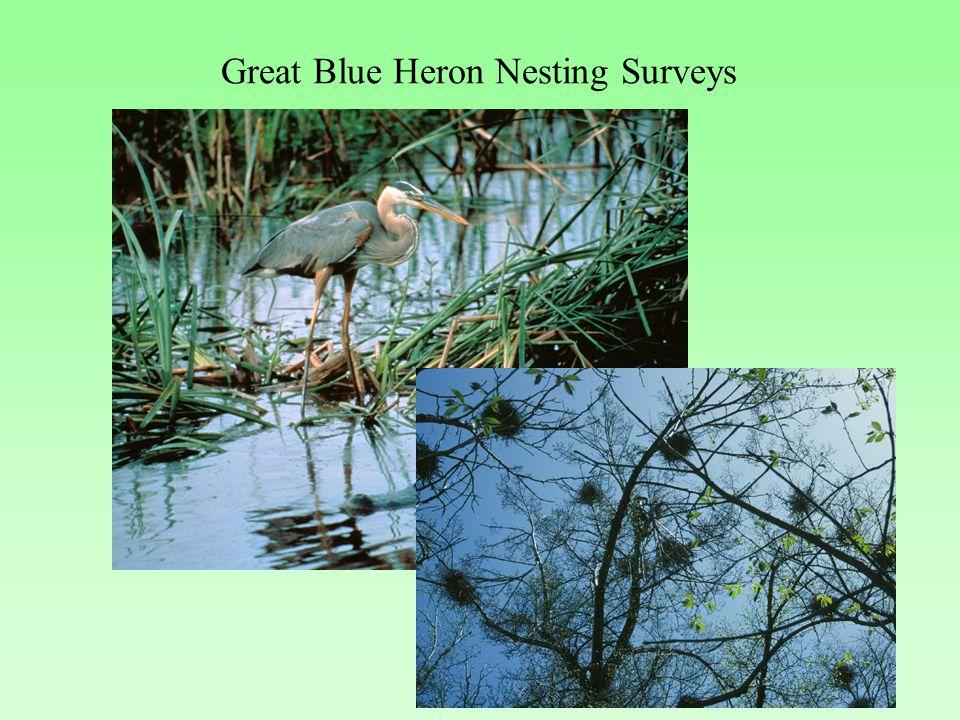 Great Blue Heron Nesting Surveys