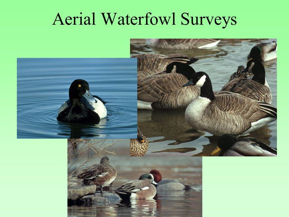 Aerial Waterfowl Surveys