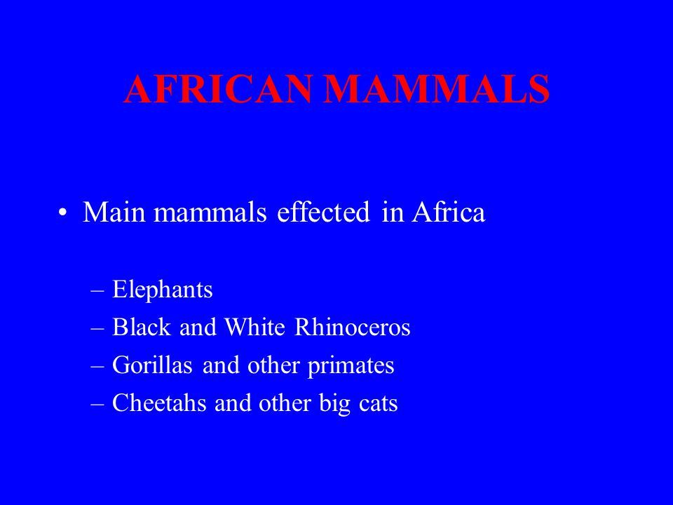 AFRICAN MAMMALS Main mammals effected in Africa –Elephants –Black and White Rhinoceros –Gorillas and other primates –Cheetahs and other big cats