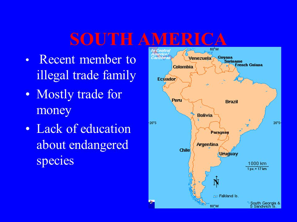 SOUTH AMERICA Recent member to illegal trade family Mostly trade for money Lack of education about endangered species