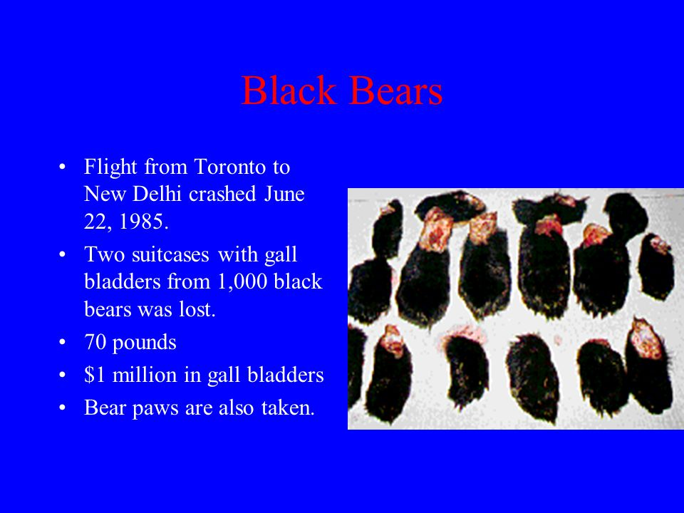 Black Bear Mainly targeted for gall bladder. Trade is similar to heroin, only scarcer.
