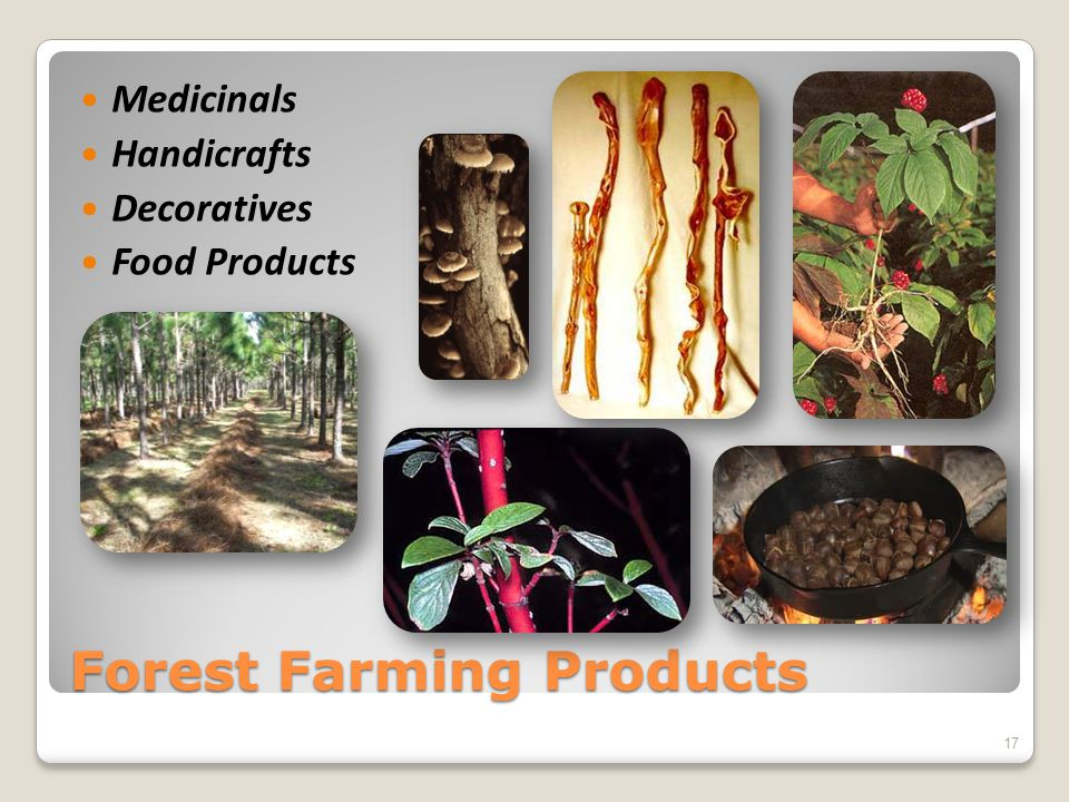Forest Farming Products Medicinals Handicrafts Decoratives Food Products 17