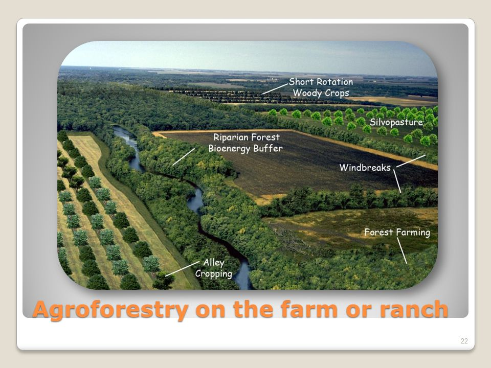 Agroforestry on the farm or ranch 22