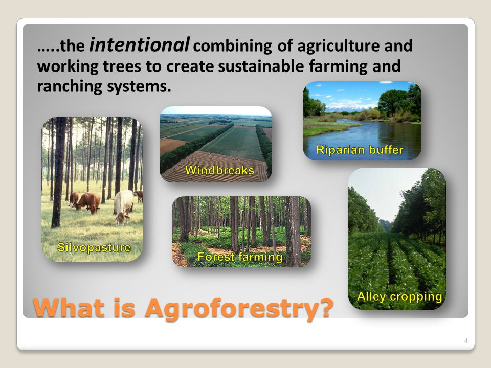 Why Agroforestry.