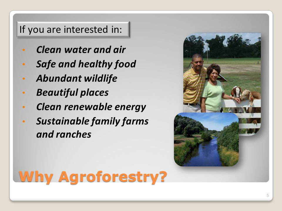 Why Agroforestry? Clean water and air Safe and healthy food Abundant wildlife Beautiful places Clean renewable energy Sustainable family farms and ran