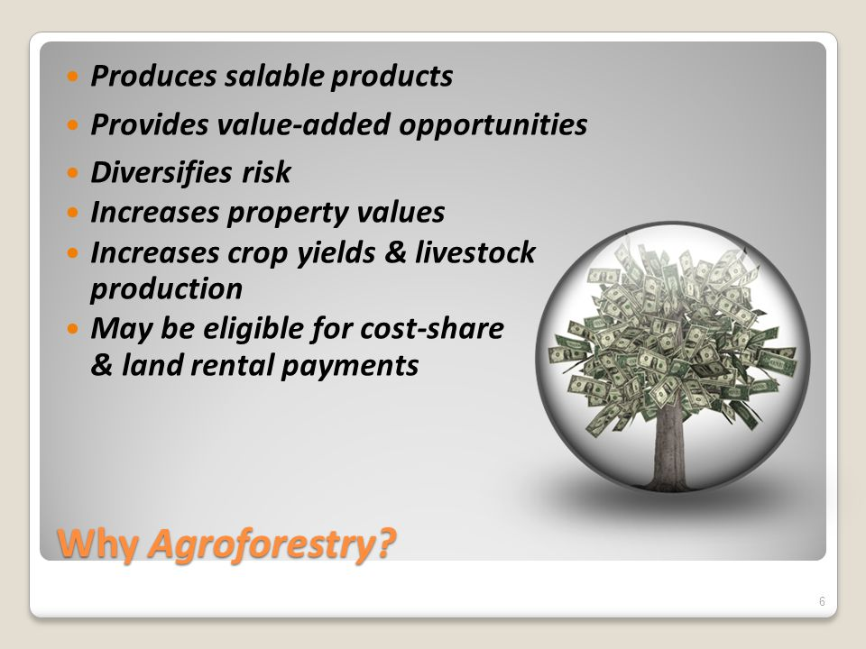 Why Agroforestry? Produces salable products Provides value-added opportunities Diversifies risk Increases property values Increases crop yields & live