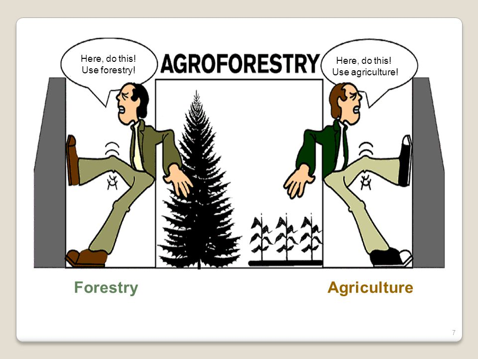AgricultureForestry Here, do this! Use agriculture! Here, do this! Use forestry! 7