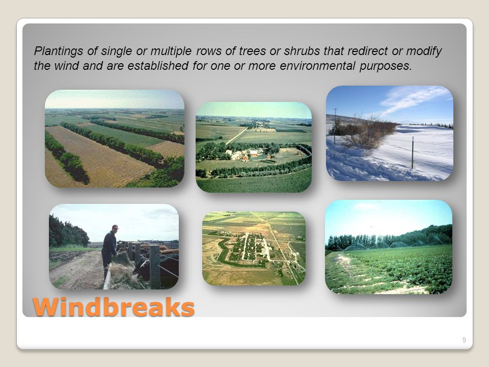 Windbreaks Plantings of single or multiple rows of trees or shrubs that redirect or modify the wind and are established for one or more environmental purposes.