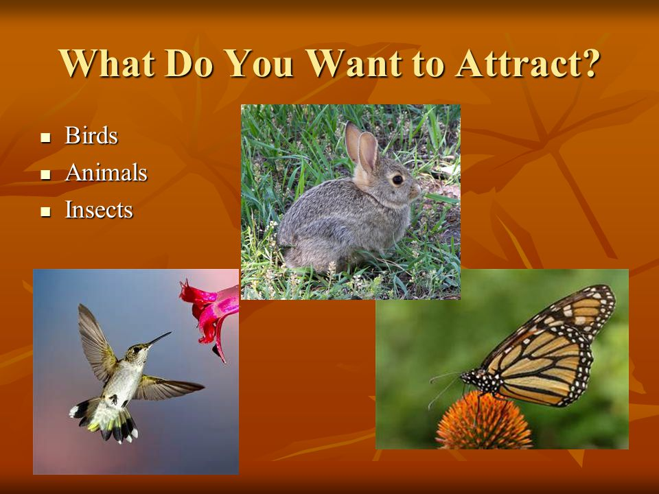 What Do You Want to Attract? Birds Birds Animals Animals Insects Insects