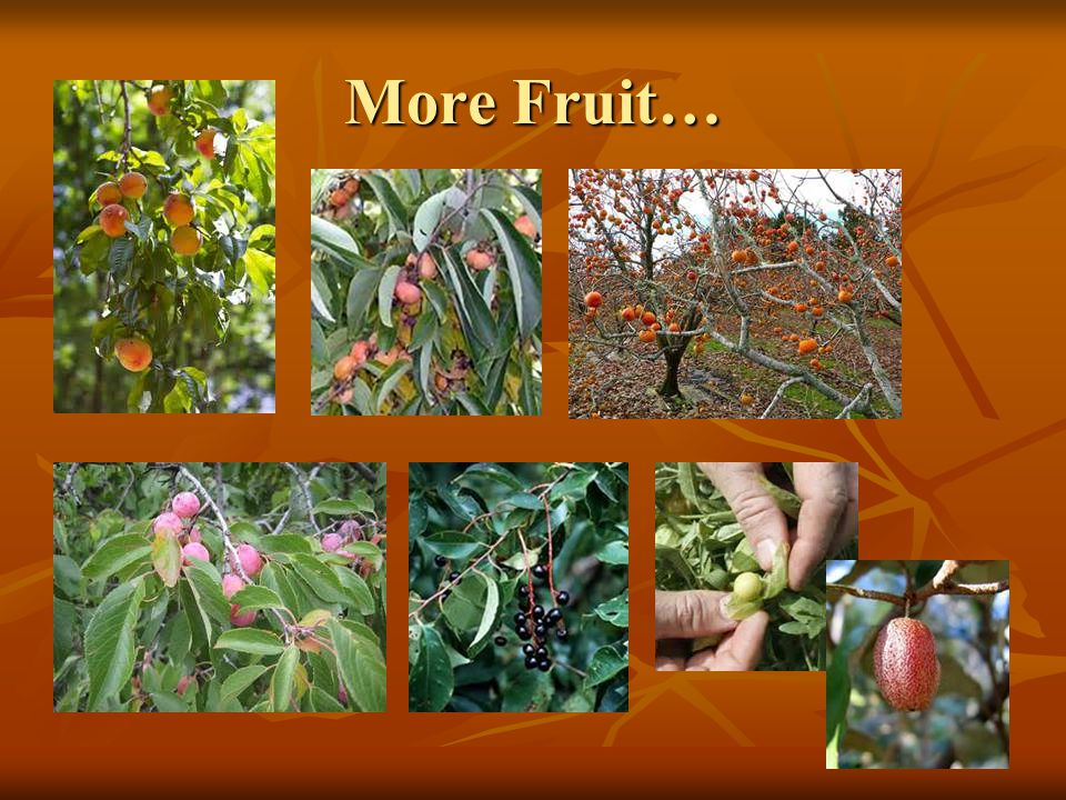 More Fruit…