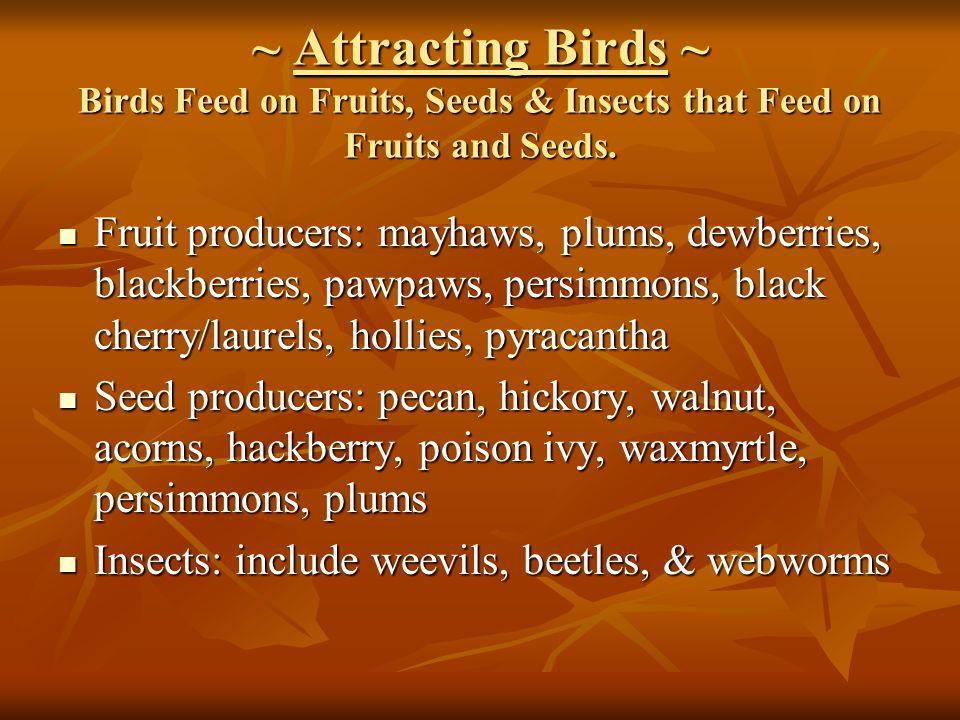 ~ Attracting Birds ~ Birds Feed on Fruits, Seeds & Insects that Feed on Fruits and Seeds. Fruit producers: mayhaws, plums, dewberries, blackberries, p