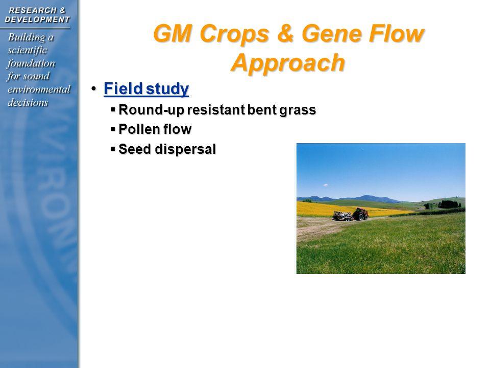 Field studyField study  Round-up resistant bent grass  Pollen flow  Seed dispersal GM Crops & Gene Flow Approach