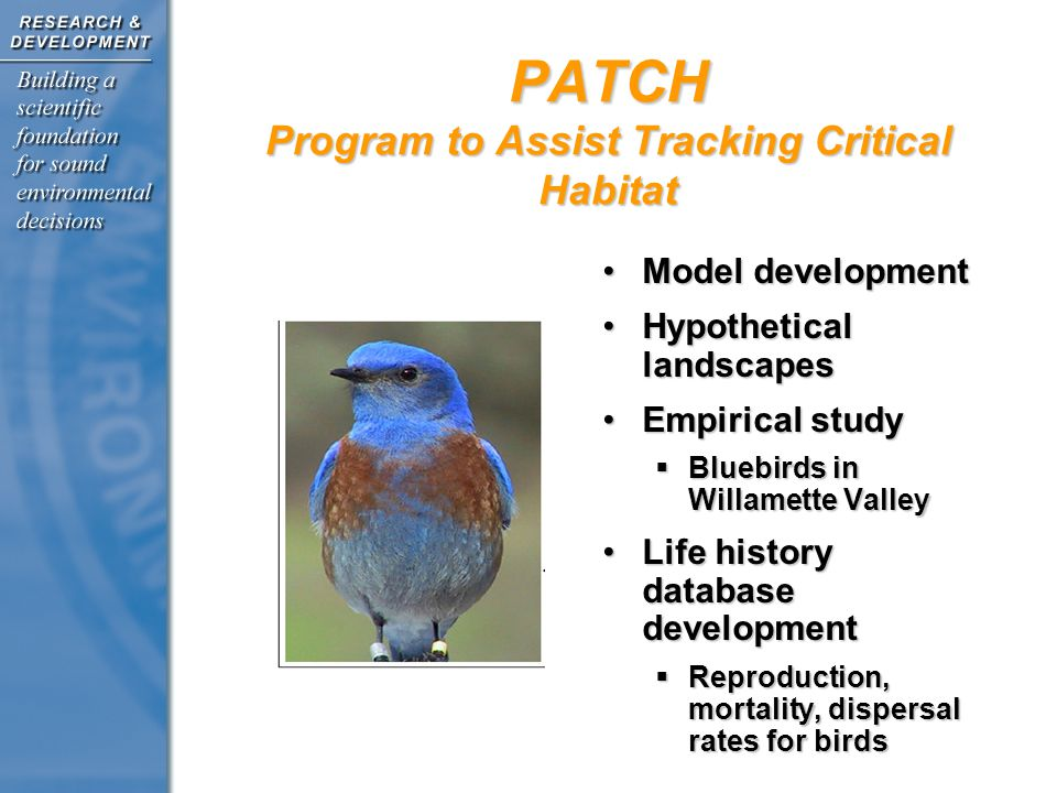 PATCH Program to Assist Tracking Critical Habitat Model developmentModel development Hypothetical landscapesHypothetical landscapes Empirical studyEmpirical study  Bluebirds in Willamette Valley Life history database developmentLife history database development  Reproduction, mortality, dispersal rates for birds