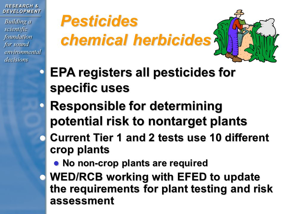 Current Tier 1 and 2 tests use 10 different crop plants Current Tier 1 and 2 tests use 10 different crop plants No non-crop plants are required No non-crop plants are required WED/RCB working with EFED to update the requirements for plant testing and risk assessment WED/RCB working with EFED to update the requirements for plant testing and risk assessment EPA registers all pesticides for specific uses EPA registers all pesticides for specific uses Responsible for determining potential risk to nontarget plants Responsible for determining potential risk to nontarget plants Pesticides chemical herbicides Chemical Herbicides