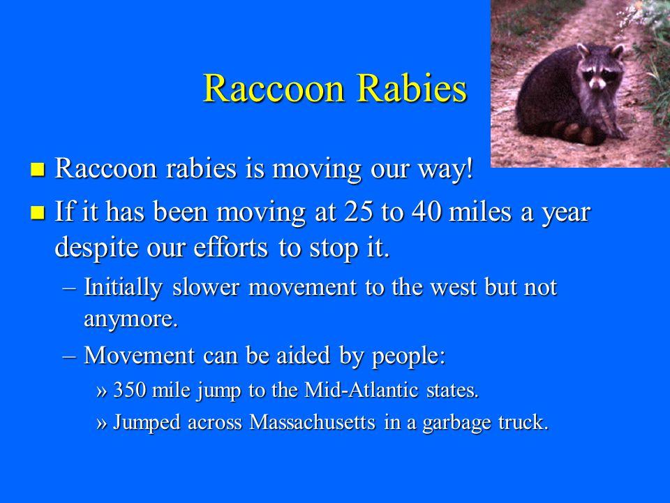 Raccoon Rabies Raccoon rabies is moving our way. Raccoon rabies is moving our way.