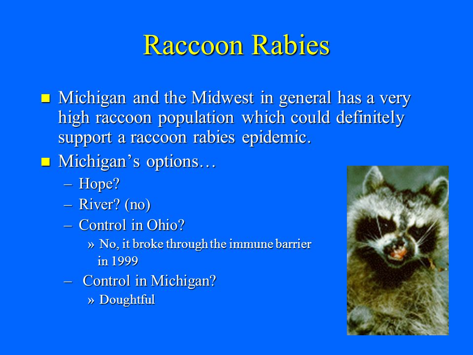 Wildlife Rabies Vaccination Background In Ontario for foxes they used a trap, vaccinate and release program.