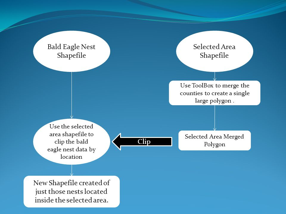 Bald Eagle Nest Shapefile Selected Area Shapefile Use ToolBox to merge the counties to create a single large polygon. Selected Area Merged Polygon Use