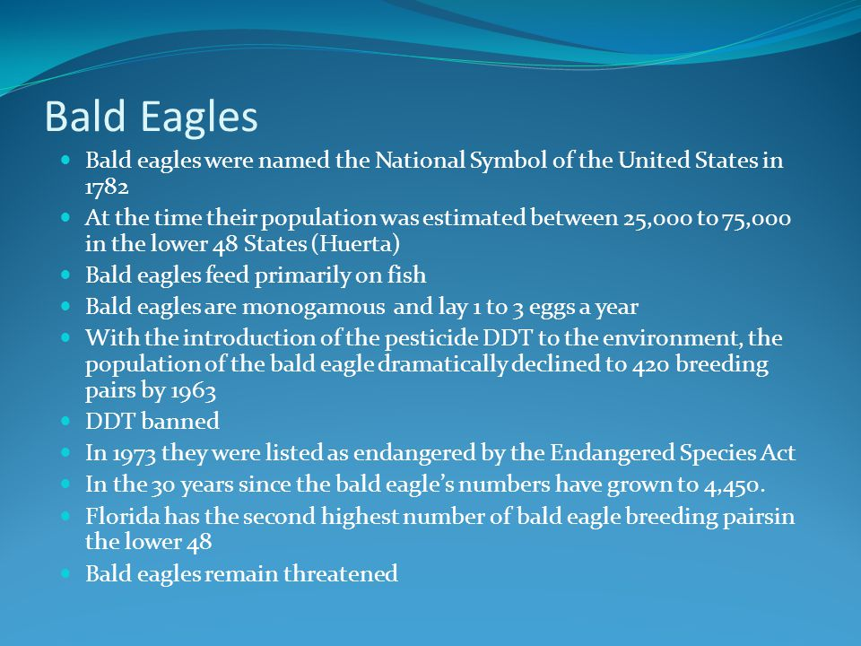 Bald Eagles Bald eagles were named the National Symbol of the United States in 1782 At the time their population was estimated between 25,000 to 75,00