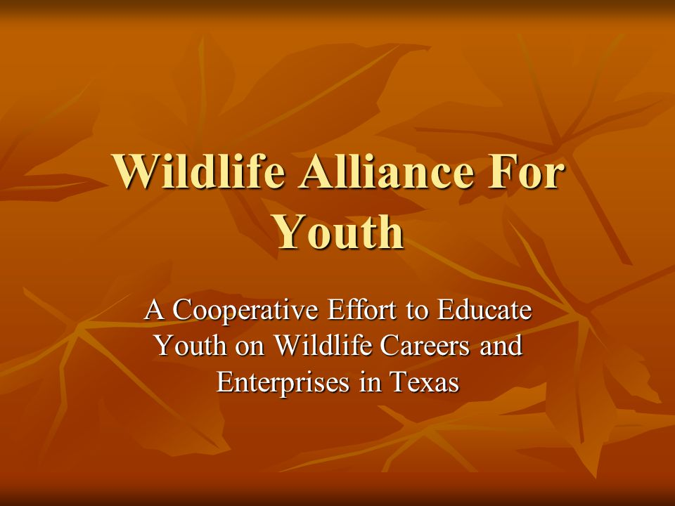 Wildlife Alliance For Youth A Cooperative Effort to Educate Youth on Wildlife Careers and Enterprises in Texas