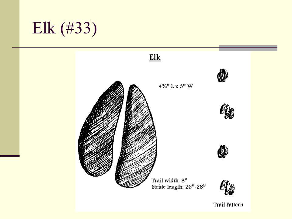 Elk (#33)