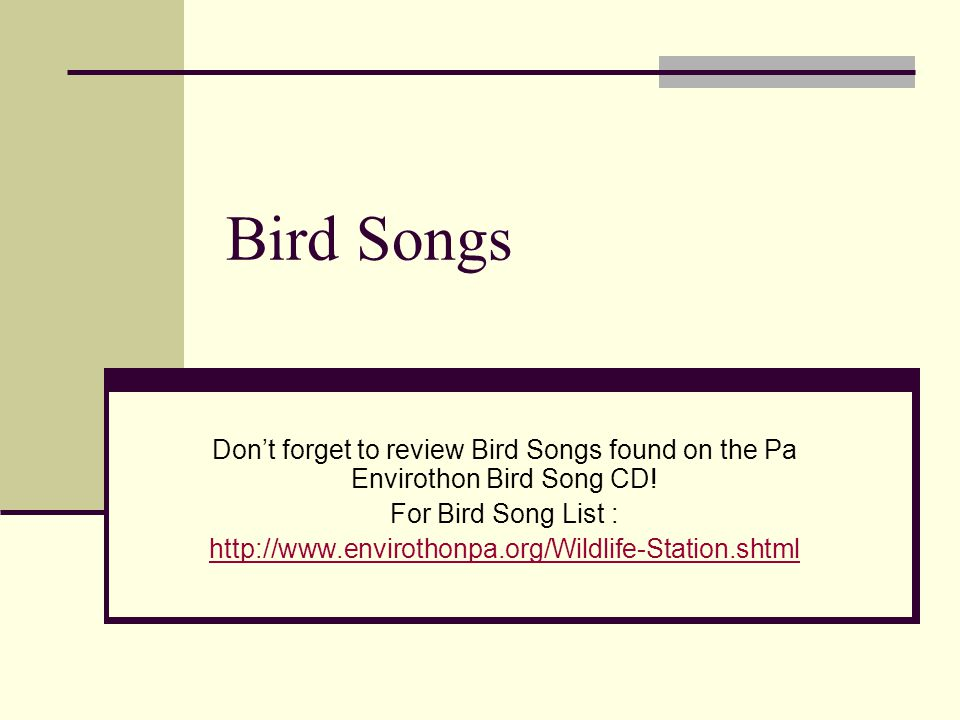 Bird Songs Don't forget to review Bird Songs found on the Pa Envirothon Bird Song CD.
