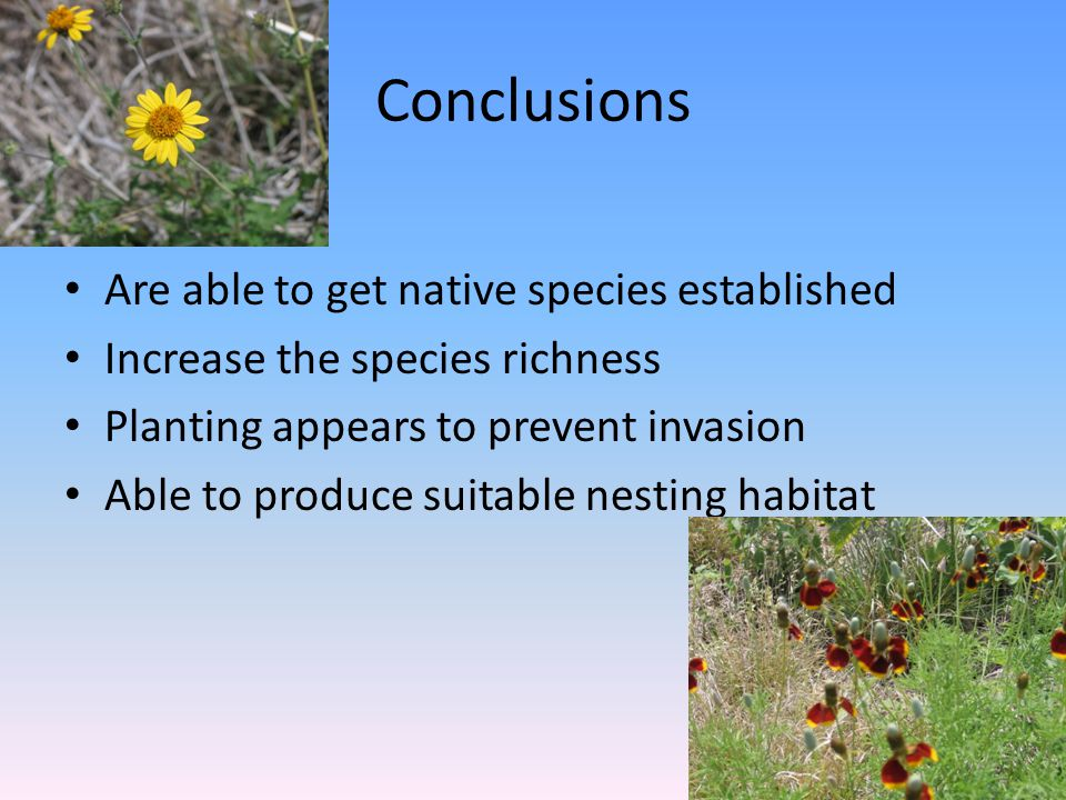 Conclusions Are able to get native species established Increase the species richness Planting appears to prevent invasion Able to produce suitable nesting habitat
