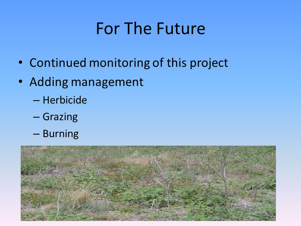 For The Future Continued monitoring of this project Adding management – Herbicide – Grazing – Burning