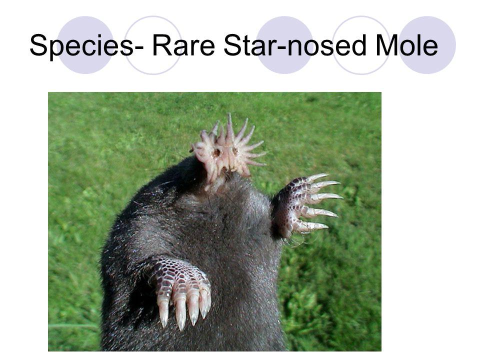 Species- Rare Star-nosed Mole